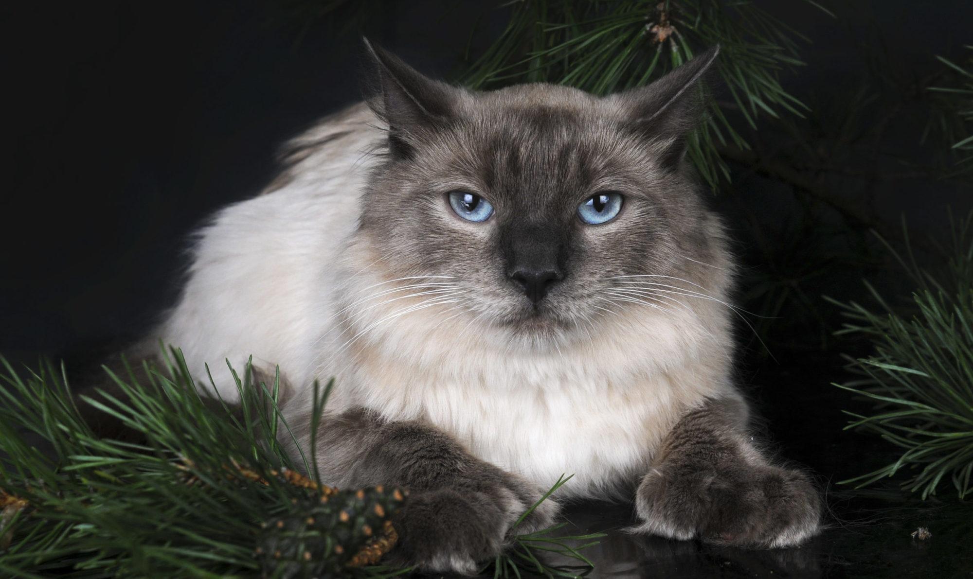 Салемские кошки